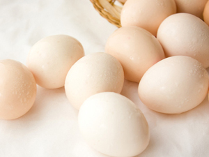 企美 柴雞蛋